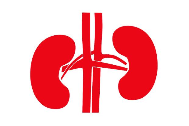kidney bendroflumethiazide