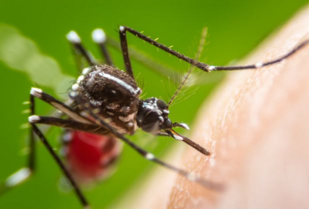 According to Public Health England, cases of malaria in the UK rose by 16% in 2016
